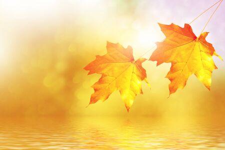 jesienny krajobraz z jasnymi kolorowymi liśćmi. Babie lato. Natura