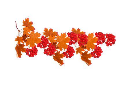 Heldere kleurrijke herfstbladeren geïsoleerd op een witte achtergrond. lijsterbes Stockfoto
