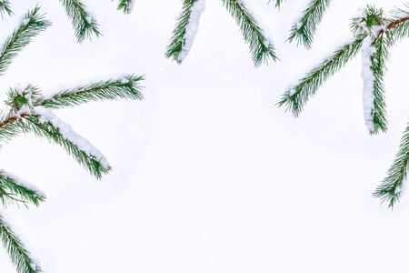 The branches of the snow covered tree on a white background. winter Stok Fotoğraf - 131351467