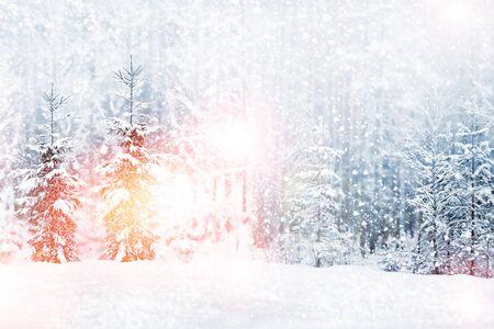 Forêt d'hiver gelée avec des arbres couverts de neige. Extérieur