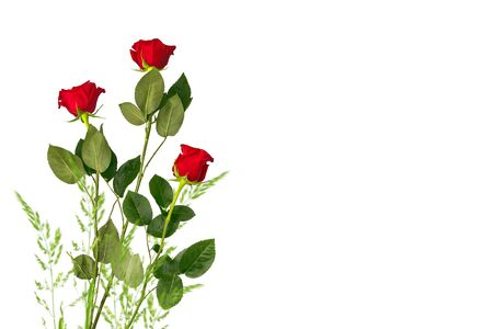 Flower bud roses on a white background. nature Banque d'images