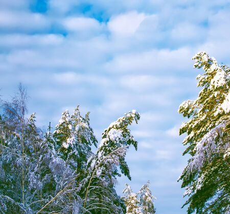 Frozen winter forest with snow covered trees. outdoor Archivio Fotografico - 133363021
