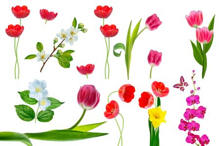 Bright colorful spring flowers isolated on white background. Nature. Stock fotó