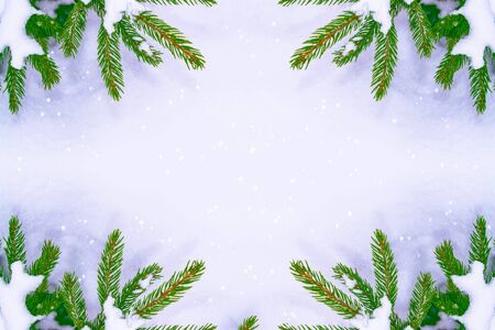 The branches of the snow covered Christmas tree. greeting card