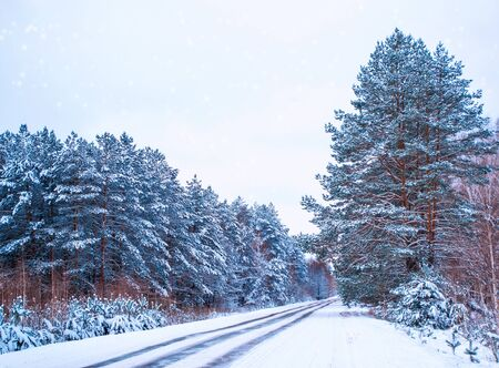 Road in the forest. Winter landscape. Snow covered trees.