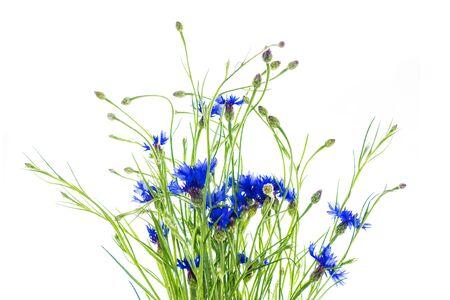 Wild flower cornflower isolated on white background. centaurea 版權商用圖片