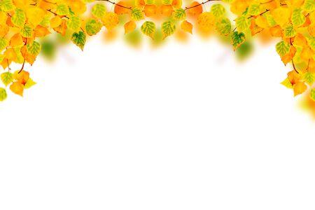 Bright autumn birch leaf on a white background.
