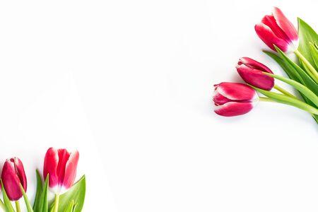 Frühlingsblumen Tulpen lokalisiert auf weißem Hintergrund.