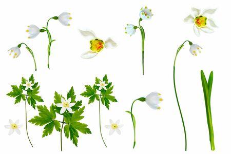 spring flowers snowdrop isolated on white background. Standard-Bild