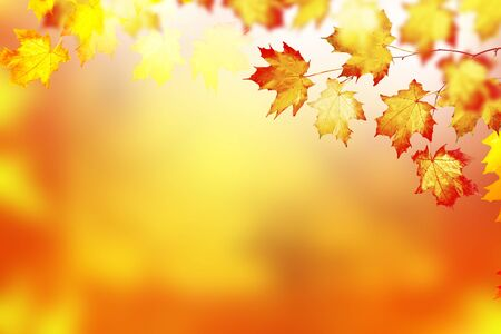 maple. autumn landscape with bright colorful leaves. Indian summer. foliage