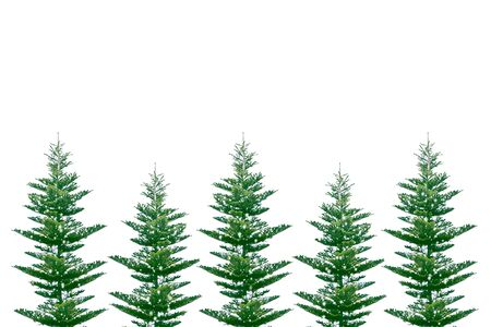 Christmas tree in the snow isolated on a white background. greeting card. winter