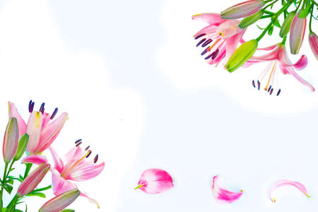 Bright lily flowers isolated on white background. nature Stock Photo