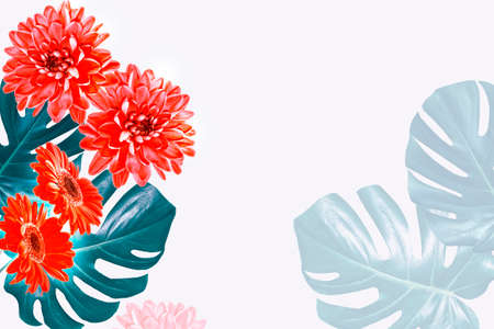 Colorful autumn flowers. Natural floral background. monstera, gerbera, chamomile. Фото со стока