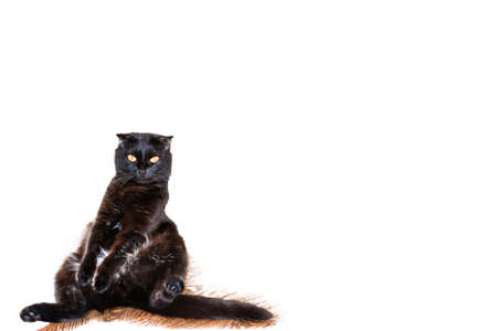 Black cute cat is sitting in a funny pose on the floor. Pet Animal isolated on white background.