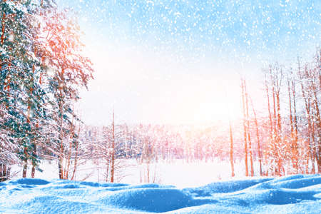 Blur. Falling snowflakes. Frozen winter forest with snow covered trees. outdoor