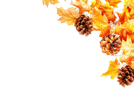 Bright and colorful autumn leaves on a white background. Pine cones and foliage