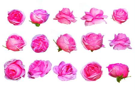 Flower bud roses on a white background. Flower collection, set. Standard-Bild