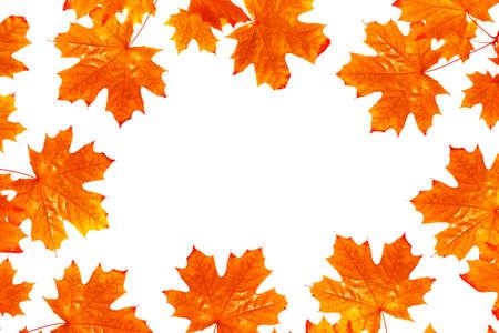 Bright autumn maple leaf on a white background. set foliage. Banque d'images