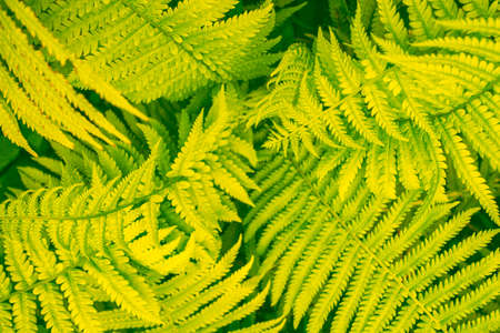 Summer landscape with leaves. Natural floral background. Fern in the forest.