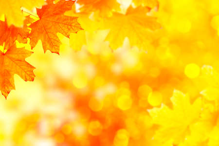 autumn landscape with bright colorful leaves. Indian summer. foliage. Reklamní fotografie