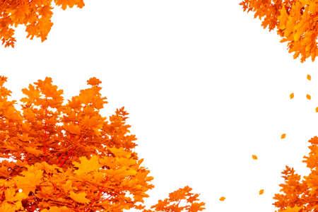 Bright autumn maple leaf on a white background. foliage