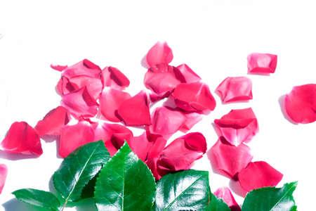 Bright pink rose petals. Natural floral background.