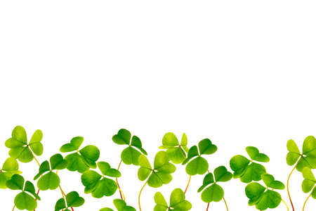 green clover leaves isolated on white background. St. Patrick 's Day. foliage Stockfoto
