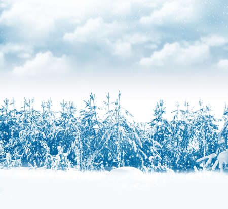 Frozen winter forest with snow covered trees. outdoor