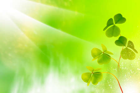 green clover leaves. St. Patrick 's Day. Spring natural background.