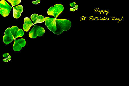 green clover leaves isolated on black background. St. Patrick 's Day. foliage shamrock