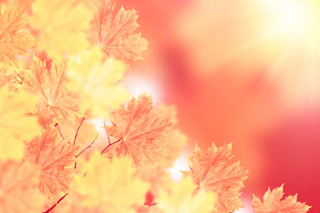 autumn landscape with bright colorful leaves. Indian summer. foliage. Stock Photo