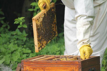 fumigador: Apicultor celebración de panal de abejas de miel