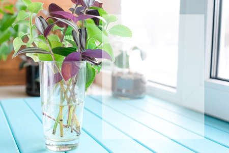 Plants in a glass with water. Background.
