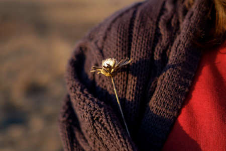 Dry flower in a knitted sweater. Sunset shooting in the field. Dead wood