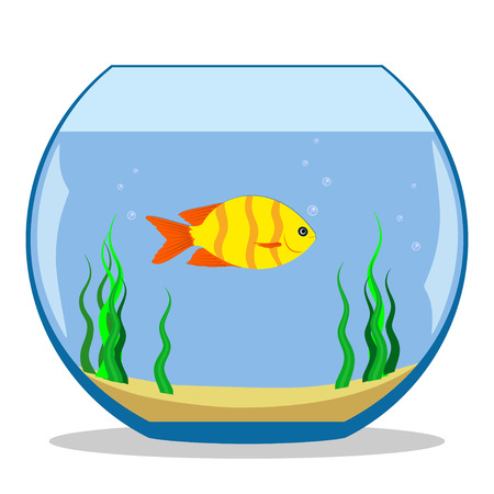 Colorful exotic fish in a fishbowl with seaweed and sand on the bottom. Vector illustration, flat Illustration