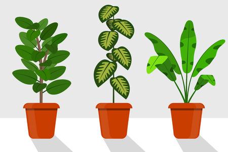 Flat style room plants in pots, vector illustration. Dieffenbachia, ficus