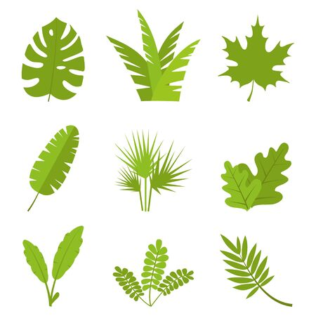 Plants, leaves, branches, bushes and pots set Flat vector illustration Illusztráció