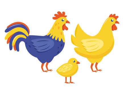 Farm birds family. Chicken, rooster, chick isolated on white background. Vector illustration