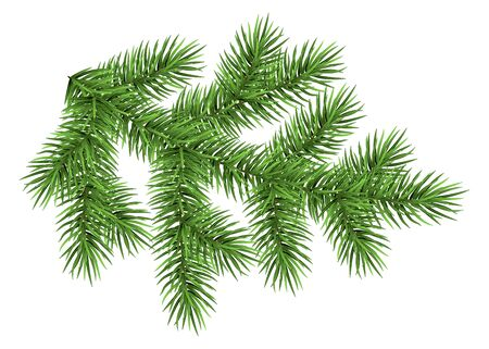 Fir branch isolated on white background. Green spruce. Realistic Christmas tree. Vector illustration for Xmas cards, banners, flyers, New year party posters.