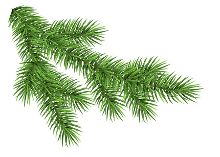 Spruce branch isolated on white background. Green fir. Realistic Christmas tree. Vector llustration for Xmas cards, New year party posters. Illustration