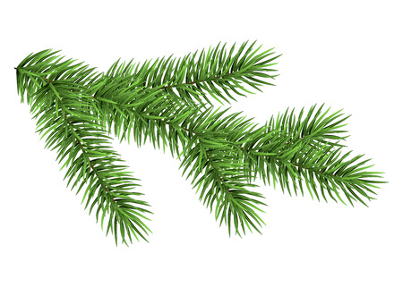 Spruce branch isolated on white background. Green fir. Realistic Christmas tree. Vector illustration. Illustration