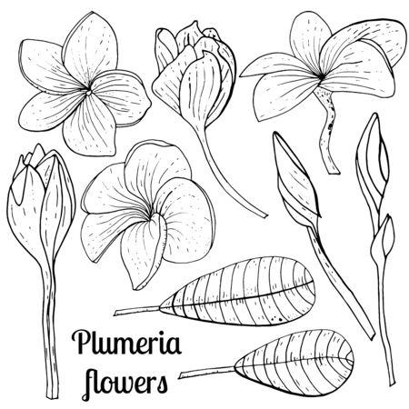 Illustration botanique de vecteur. Croquis vintage dessinés à la main de l'ensemble floral de frangipanier de doublure.