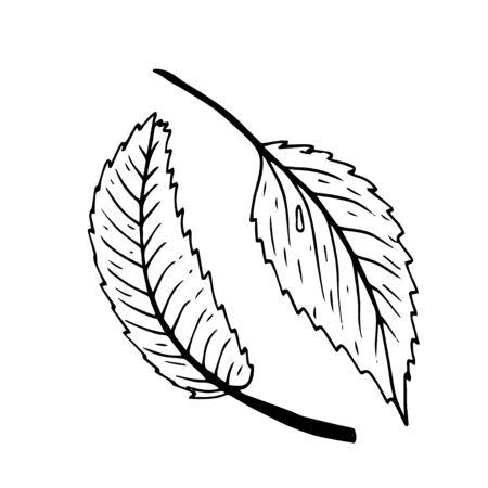 Summer fruit engraved style illustration. Detailed hand drawn illustration with leaves of rosehip. Floral element for decor. Standard-Bild - 133963264