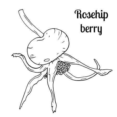 Detailed hand drawn illustration with berry of rosehip. Floral element for decor. Summer fruit engraved style illustration. Standard-Bild - 133963265