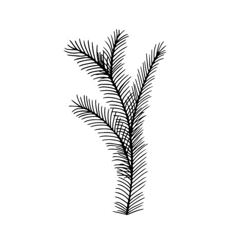 Merry Christmas and Happy New Year doodle decoration. Hand drawn fir branch vector illustration. Fluffy fir tree branch isolated on white background. Line art style illustration for decoration. Reklamní fotografie - 135491679