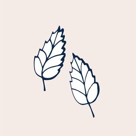 Leaves of roses. Hand drawn illustration. Doodle vector illustration. Leaves of green tea.