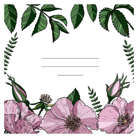Elegant greeting card with wild roses. Postcard with pink flowers. Wedding vector design. Color floral poster.