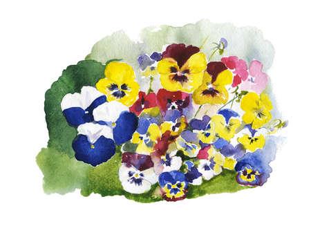 pansies: colorful pansies