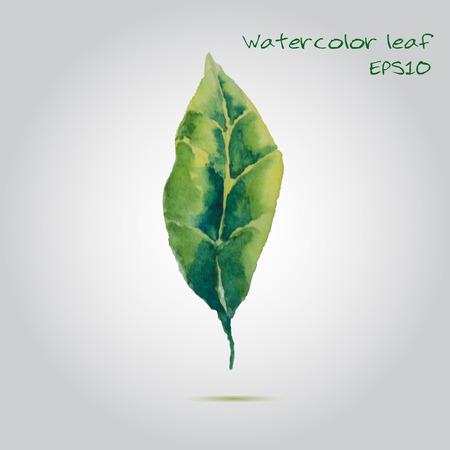 Watercolor leaf EPS10 Vector