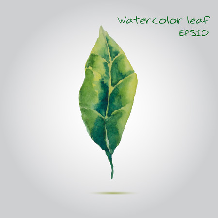 Watercolor leaf EPS10 Vector